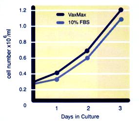 MDBK (NBL-1) Bovine Kidney